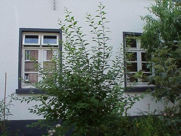 Fenster2No.jpg